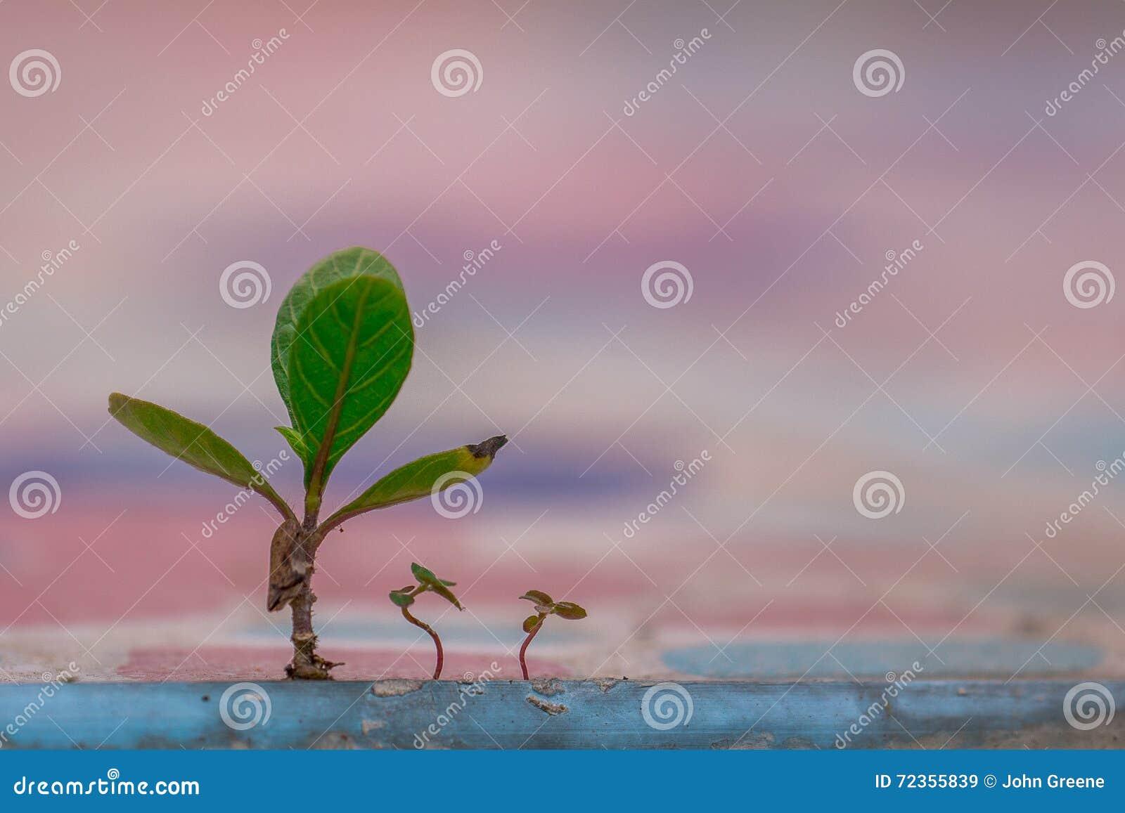 概念性图象、成长和育儿