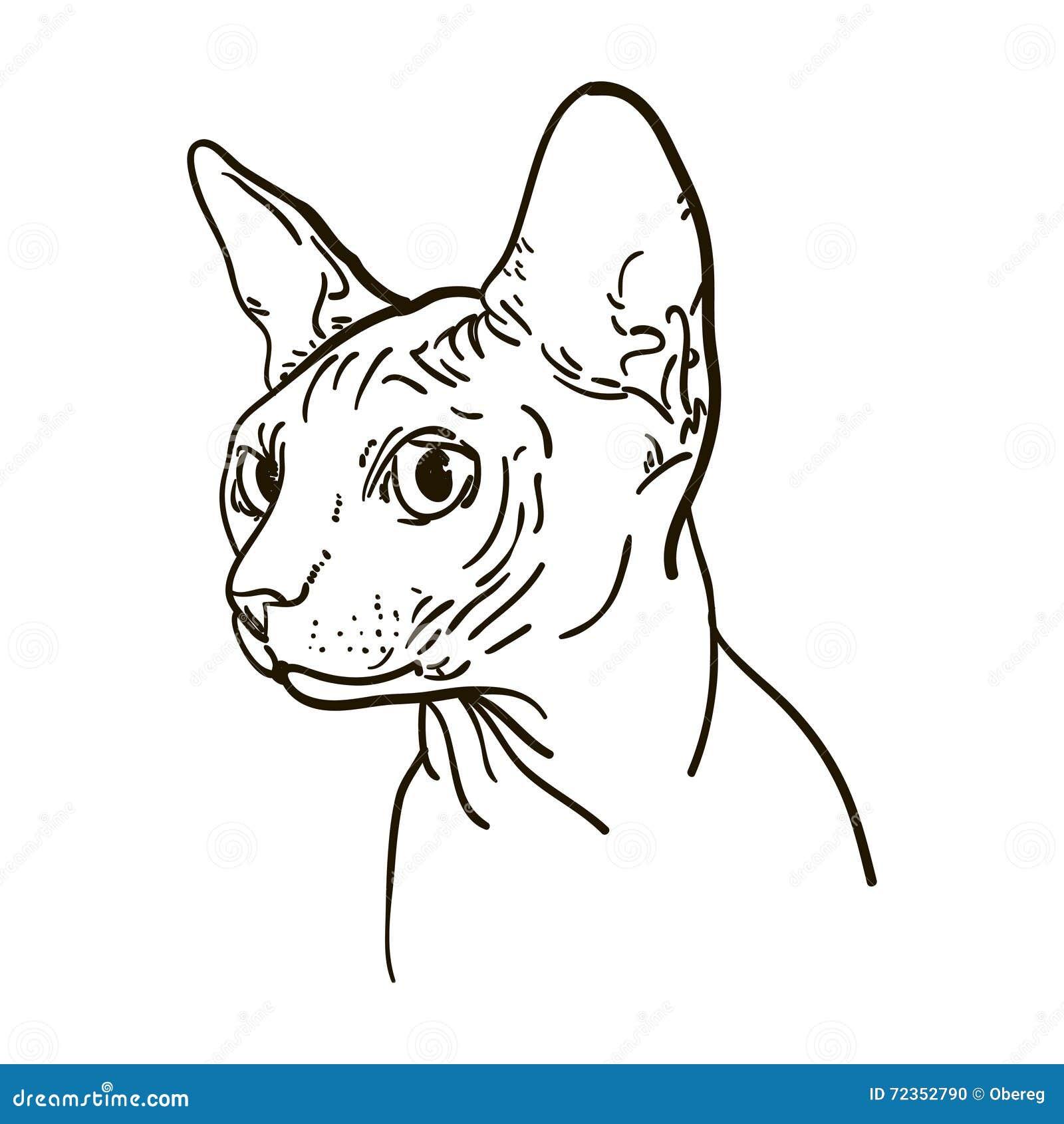 概述猫sphynx传染媒介例证