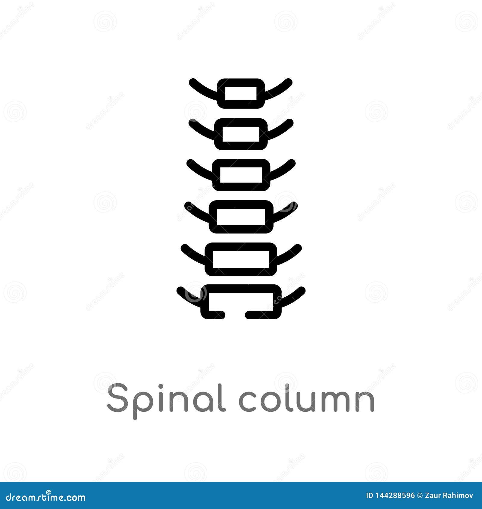 概述脊柱传染媒介象 E r