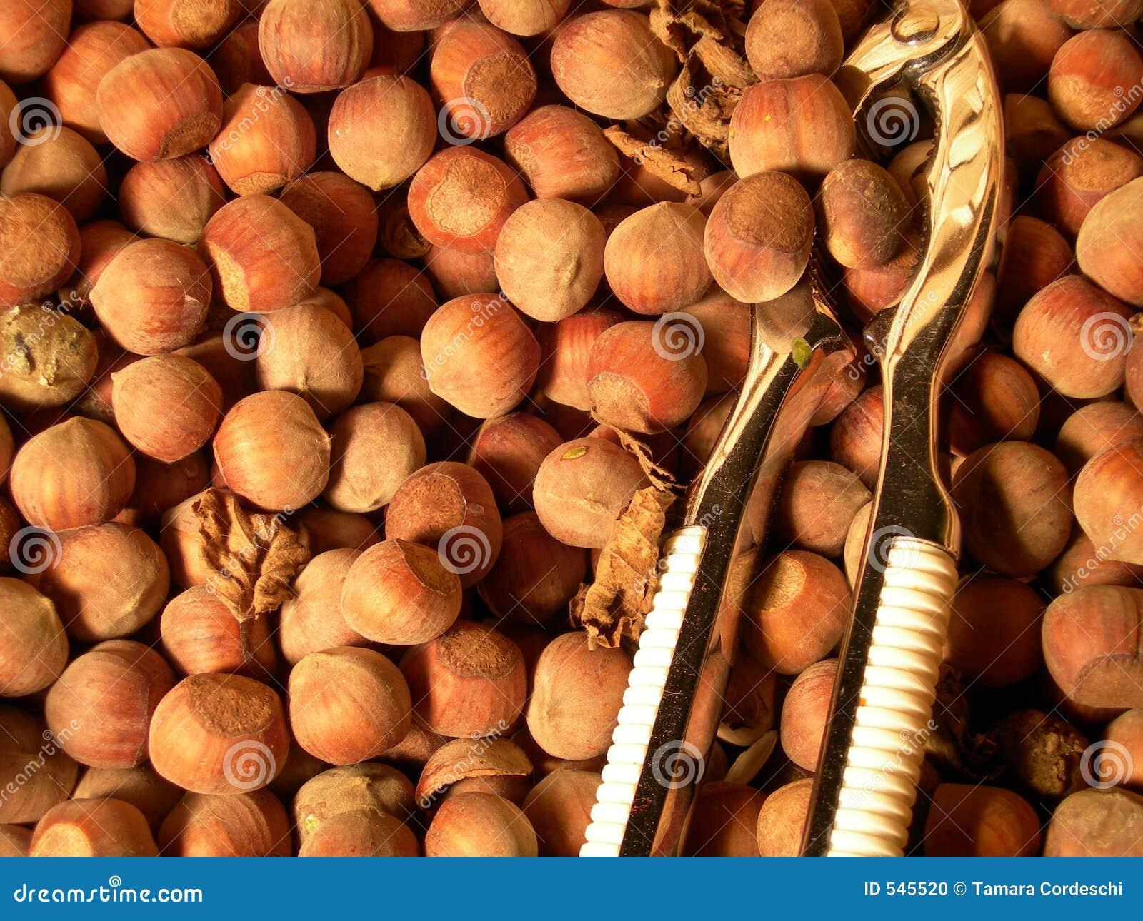Download 榛子 库存照片. 图片 包括有 browne, 易碎, 果子, 食物, 胡桃钳, 种子, 欧洲榛树, 榛子 - 545520