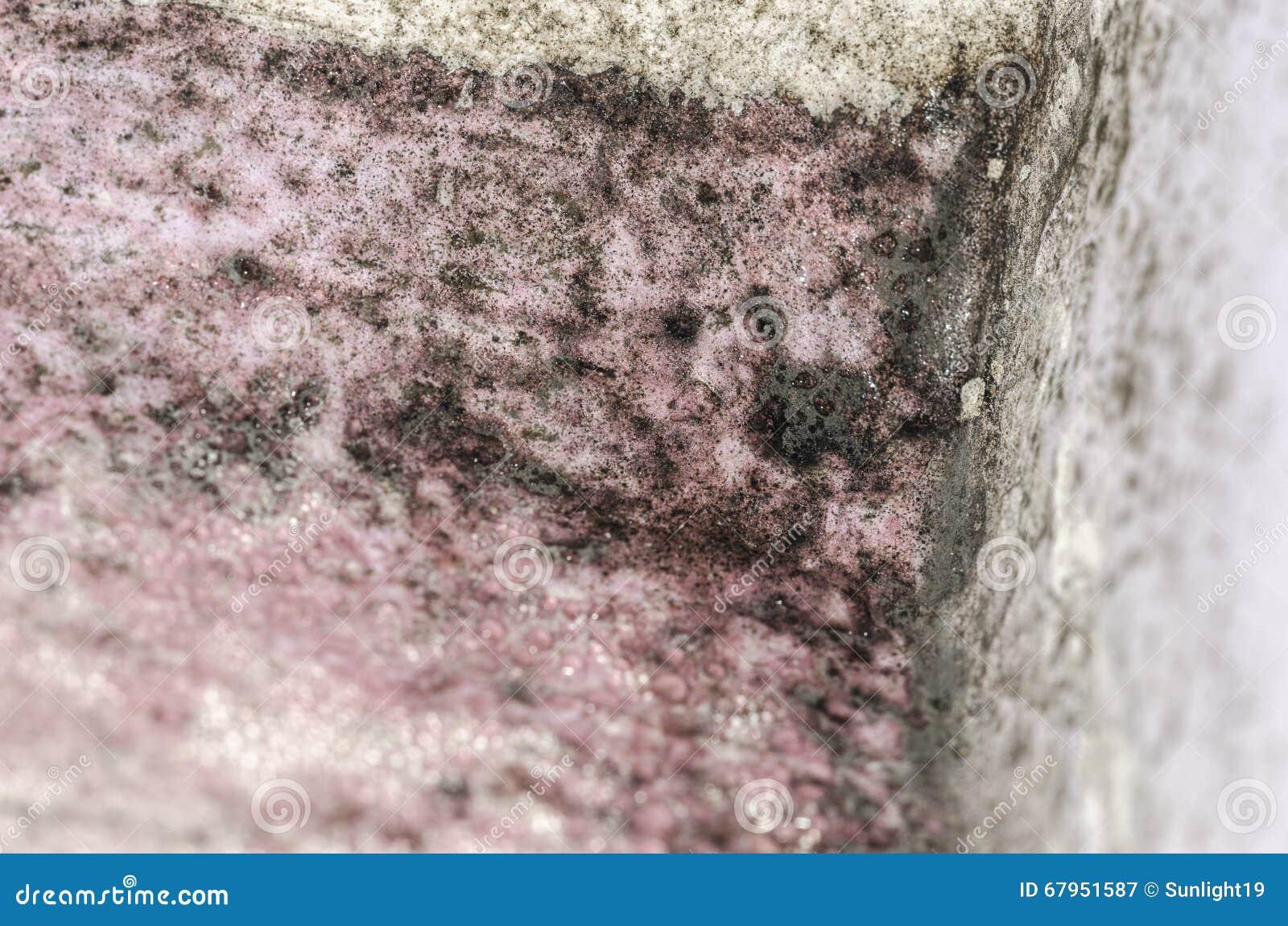 模子和湿气积累Detal在桃红色墙壁上的