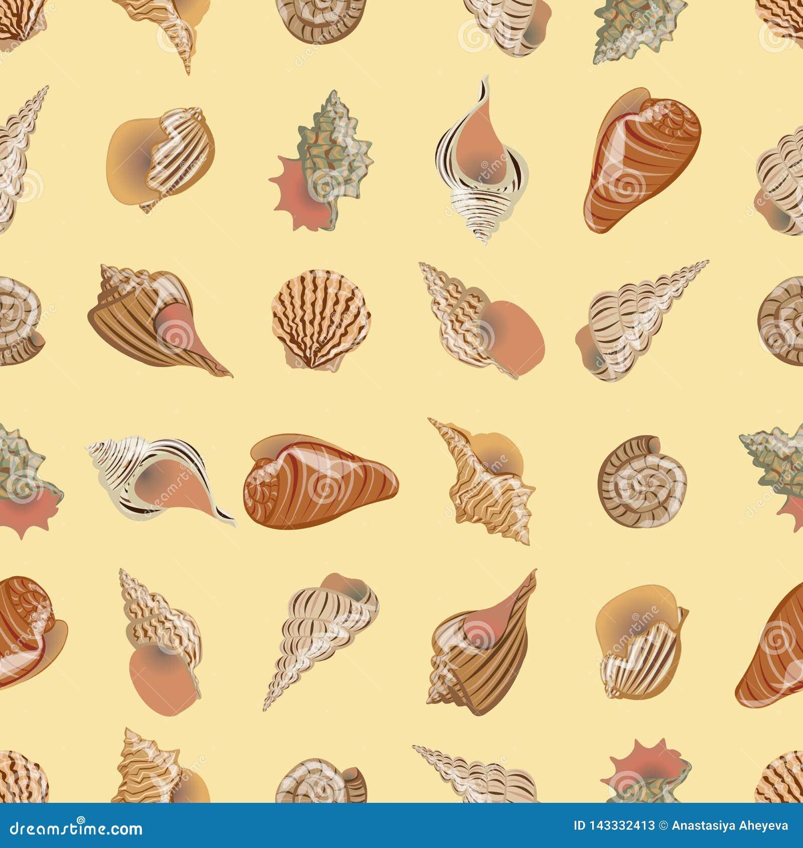 模式无缝的向量 不同和形式海和河海扇壳