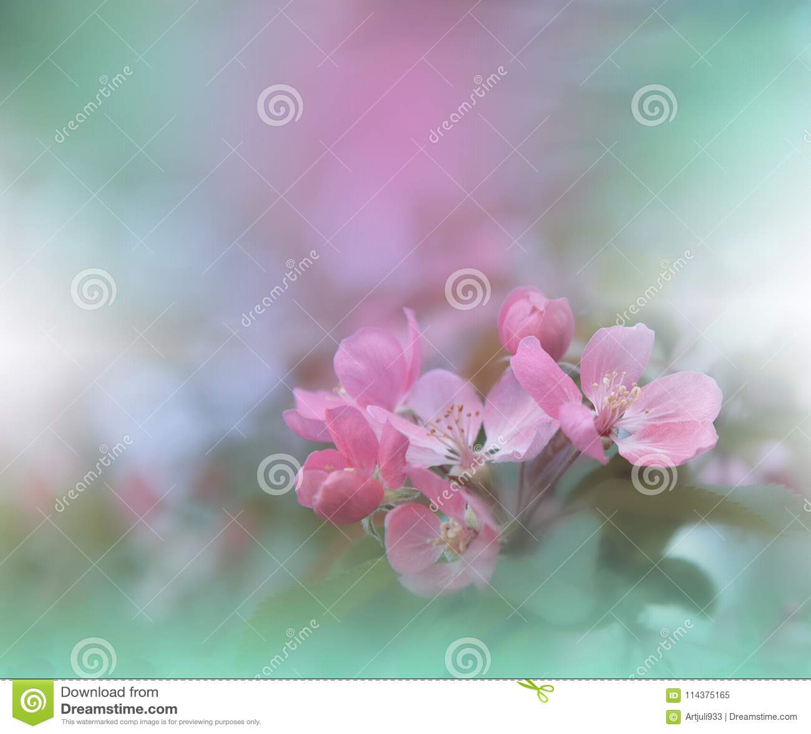 横幅开花标头本质春天万维网 抽象宏观照片 艺术性的背景 幻想设计 五颜六色的墙纸