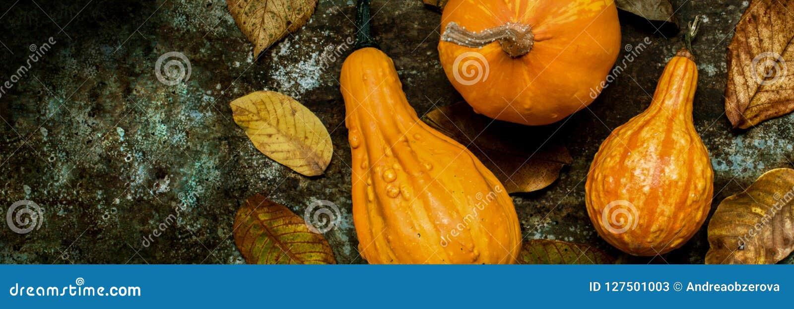 横幅愉快的感恩 各种各样的南瓜的选择在黑暗的金属背景的 秋天收获和假日静物画