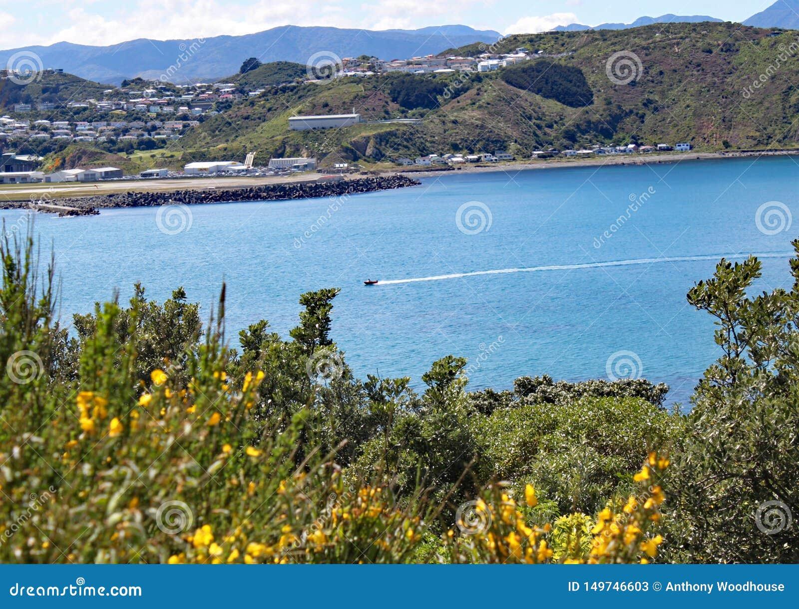 横跨Lyall海湾的汽船速度在惠灵顿,新西兰 机场是可看见的在背景中