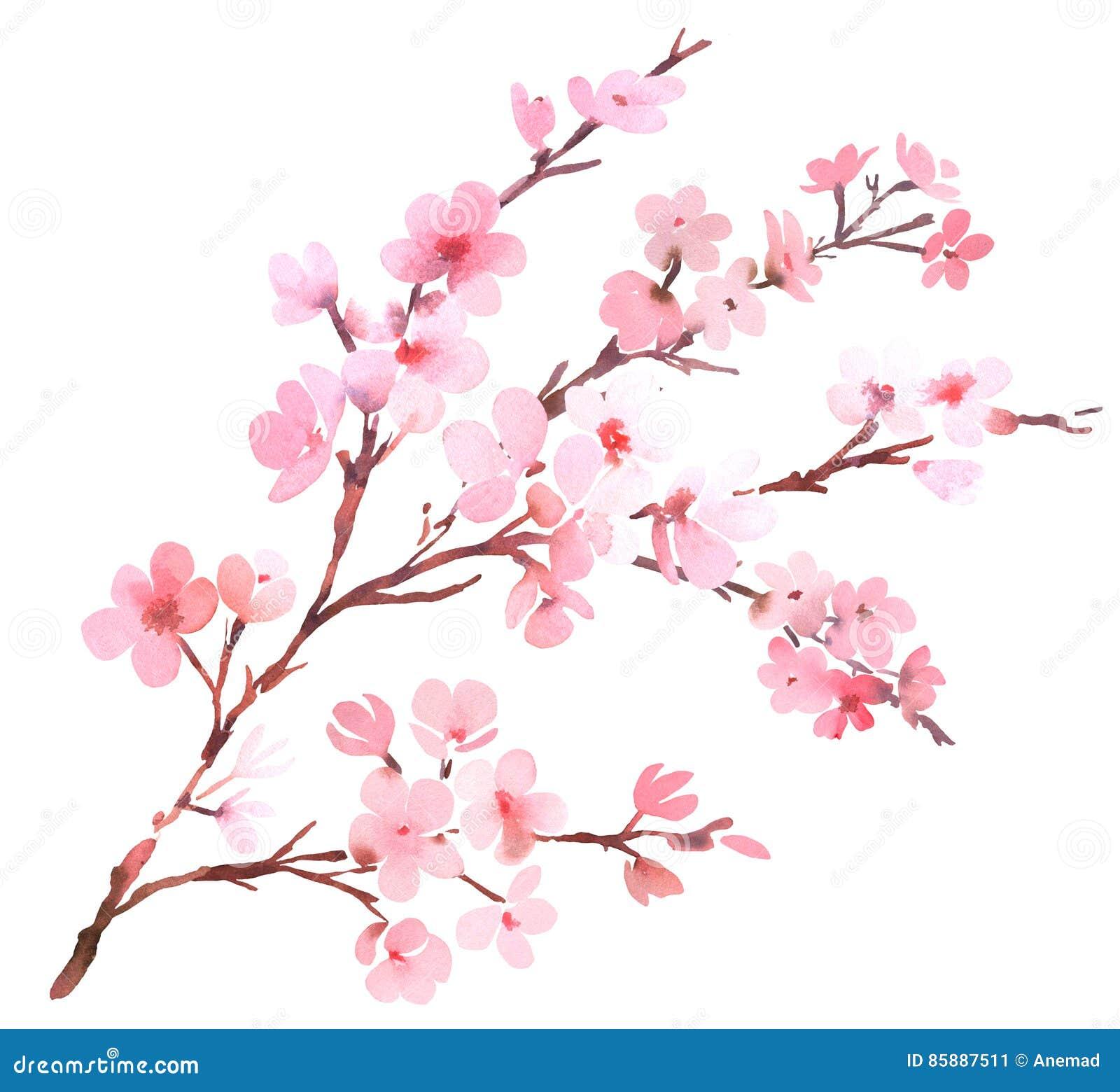 樱桃树桃红色开花