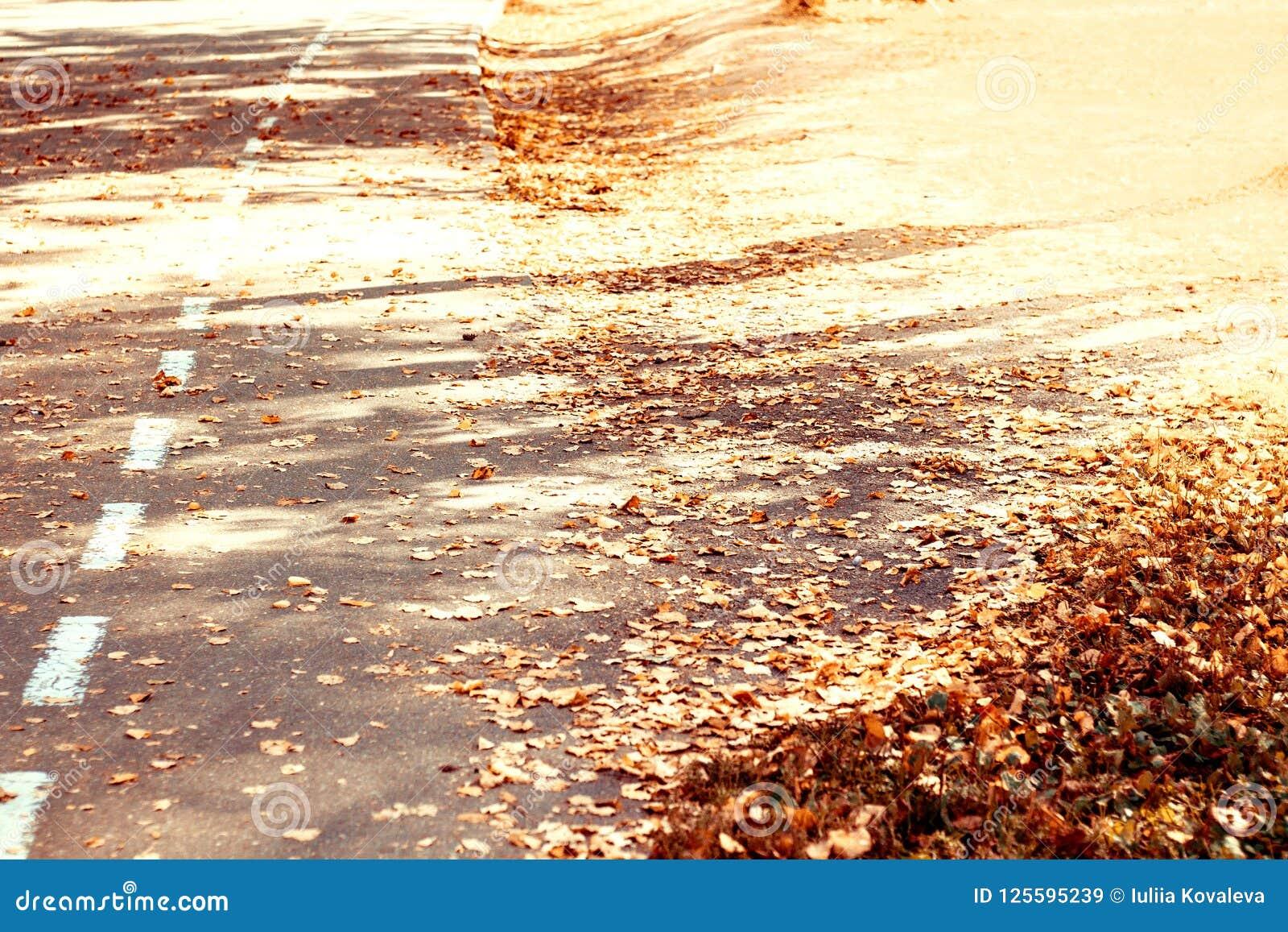 橙色秋叶在阳光下在沥青