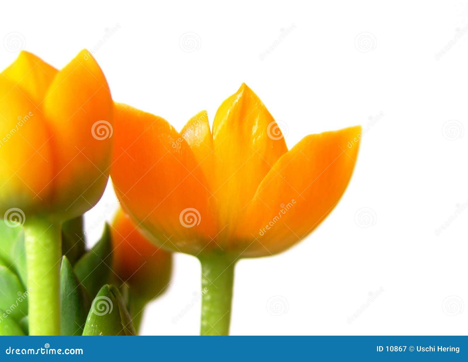 橙色2的开花