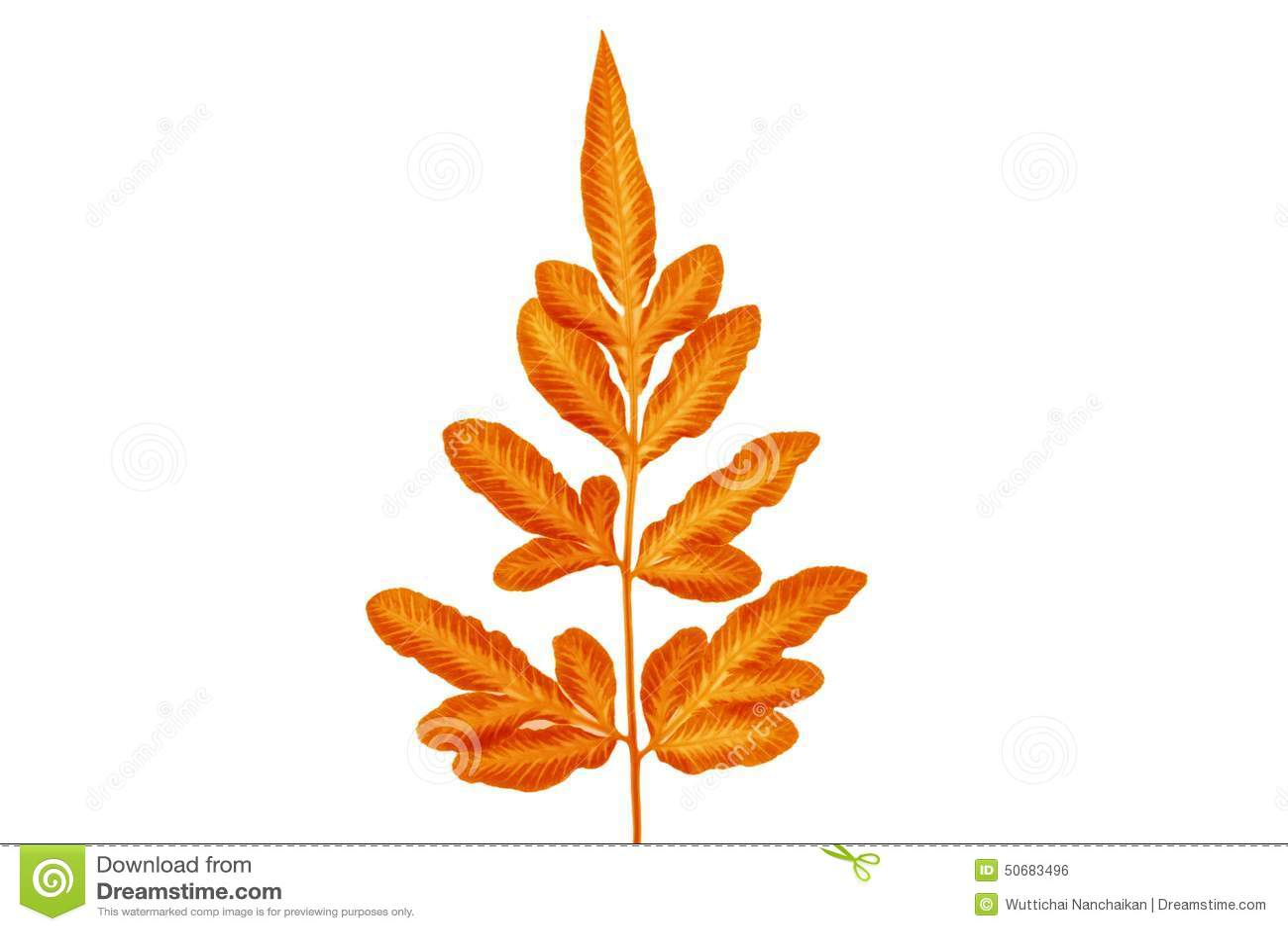 Download 橙黄色叶子 库存照片. 图片 包括有 森林, 特写镜头, 照亮, 工厂, 自动驾驶仪, 夏天, 设计, 自然 - 50683496