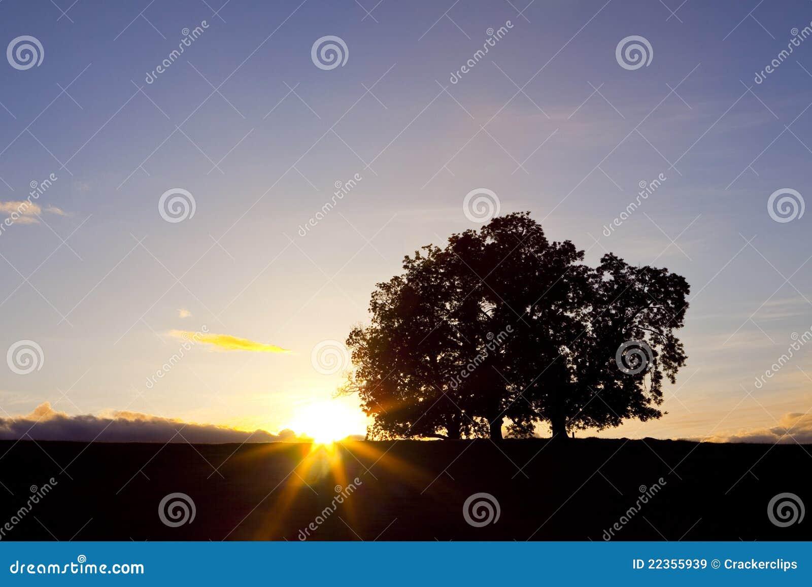 橡木日落三结构树