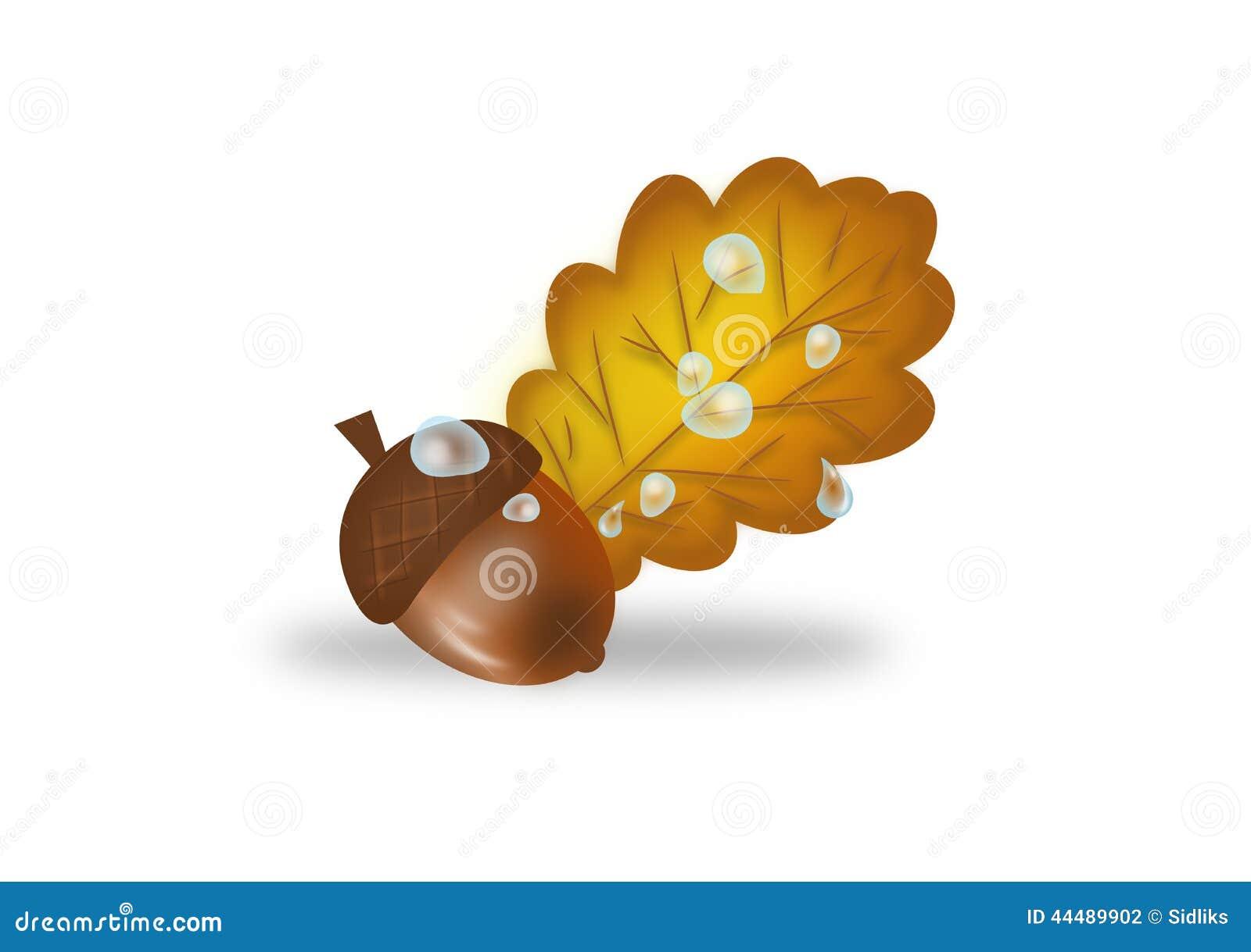 橡树橡子和叶子