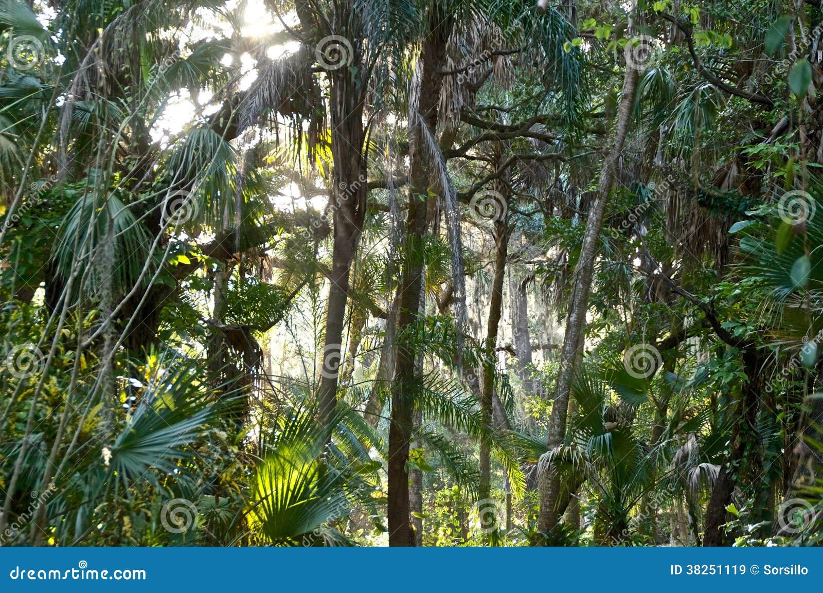 次级热带森林看法