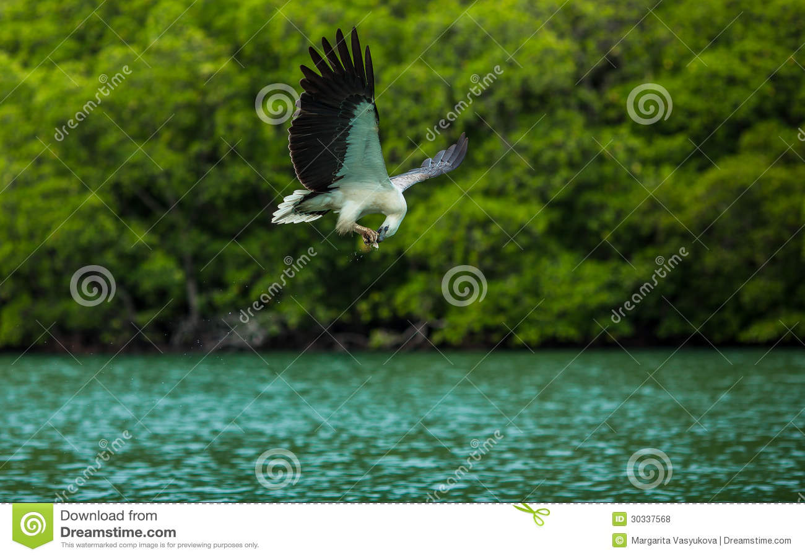 正在进行中吃的老鹰