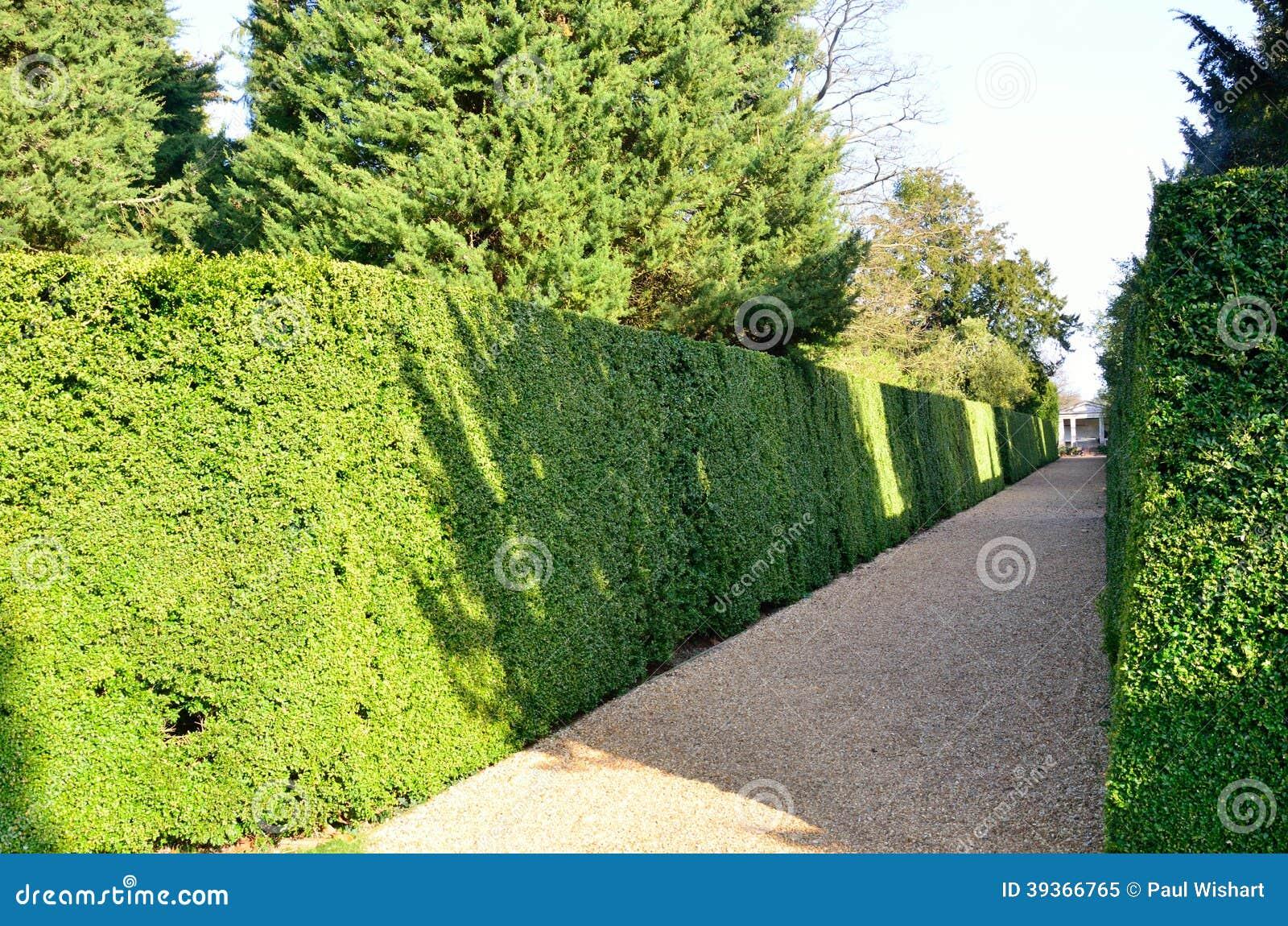 正式树篱和道路