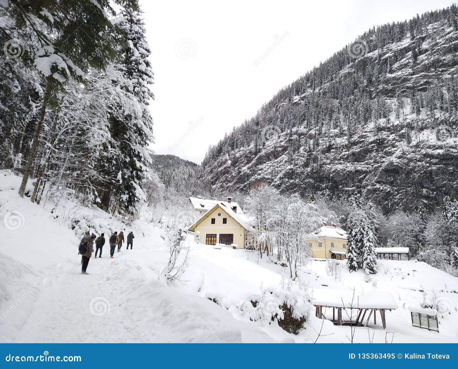步行低谷Hallstatt,奥地利多雪的森林  从顶层的冬天视图