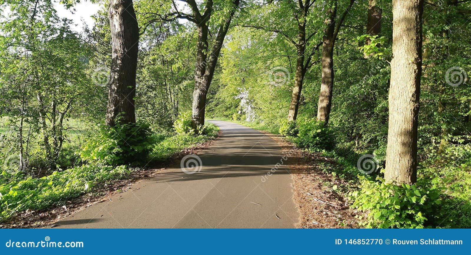 步行在公园在夏天绿色森林里