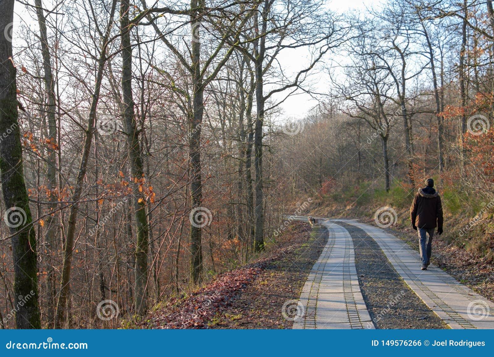 步行沿着向下欧洲森林的人在秋天