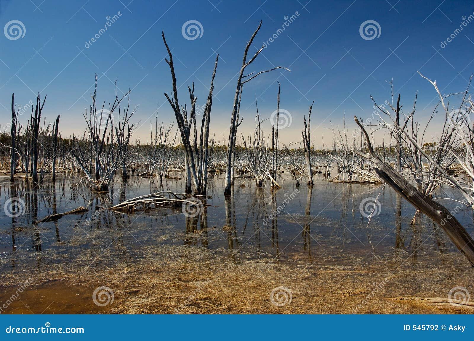 Download 死亡生活 库存照片. 图片 包括有 纹理, 天旱, 澳洲, 旅行, 沙漠, 本质, 灾害, 生活, 旅游业, 气候 - 545792