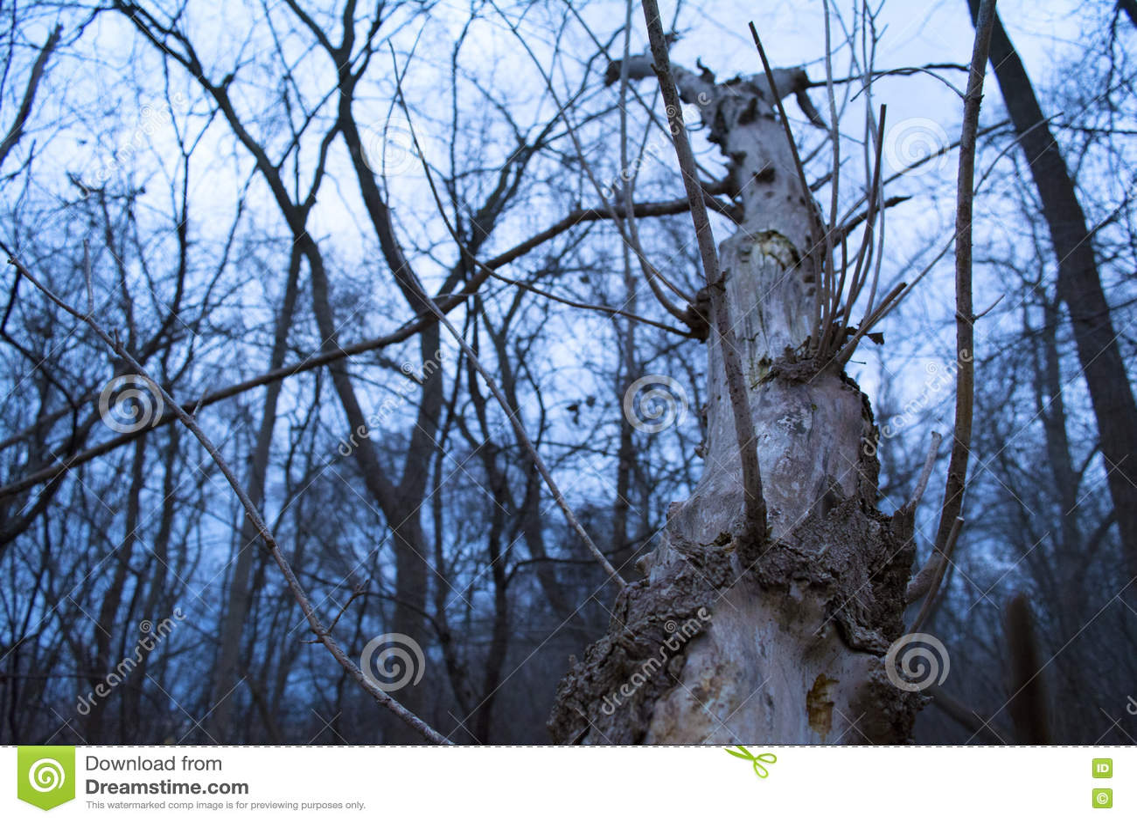 残破的结构树