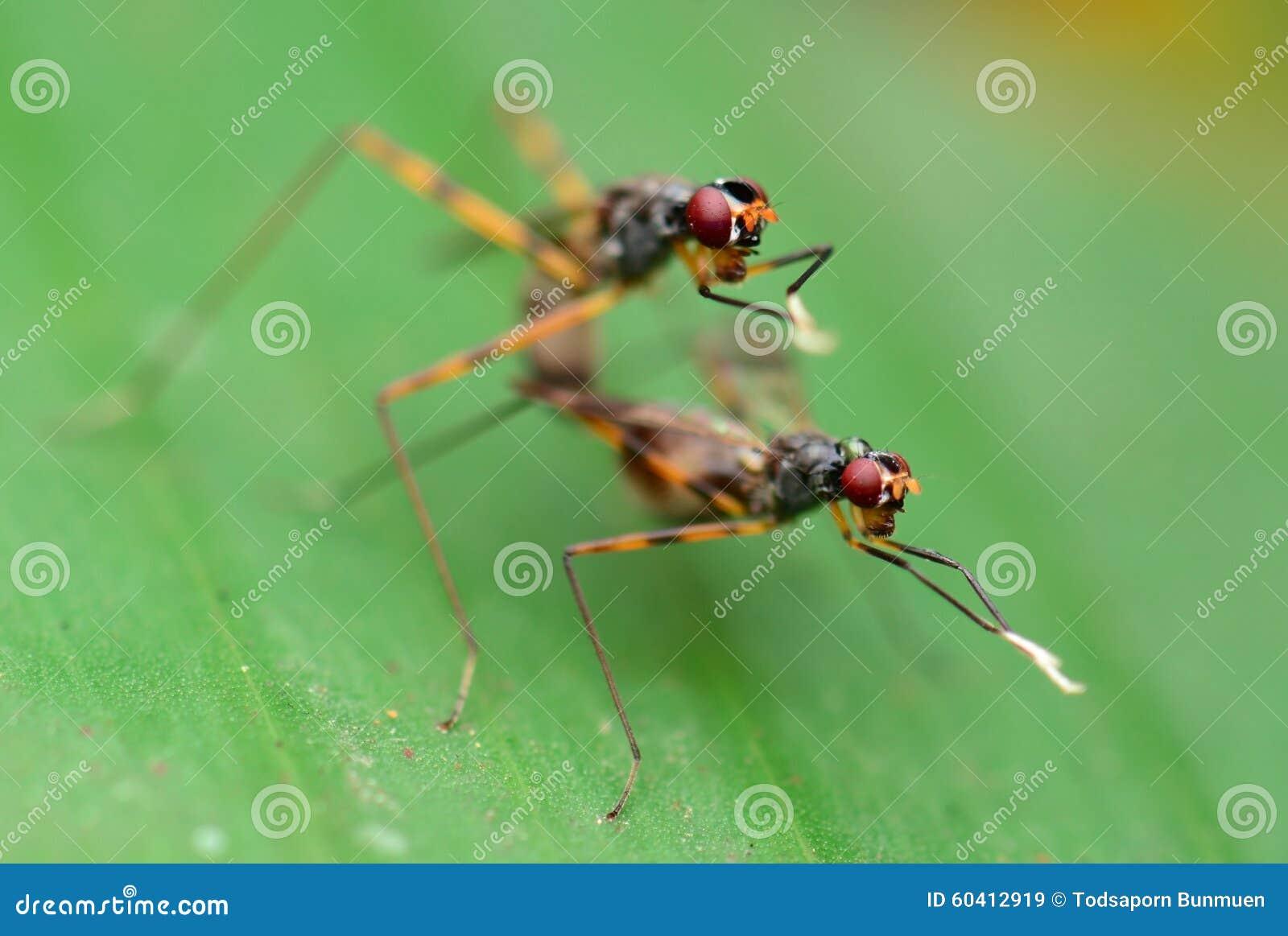 养殖有软的背景的昆虫