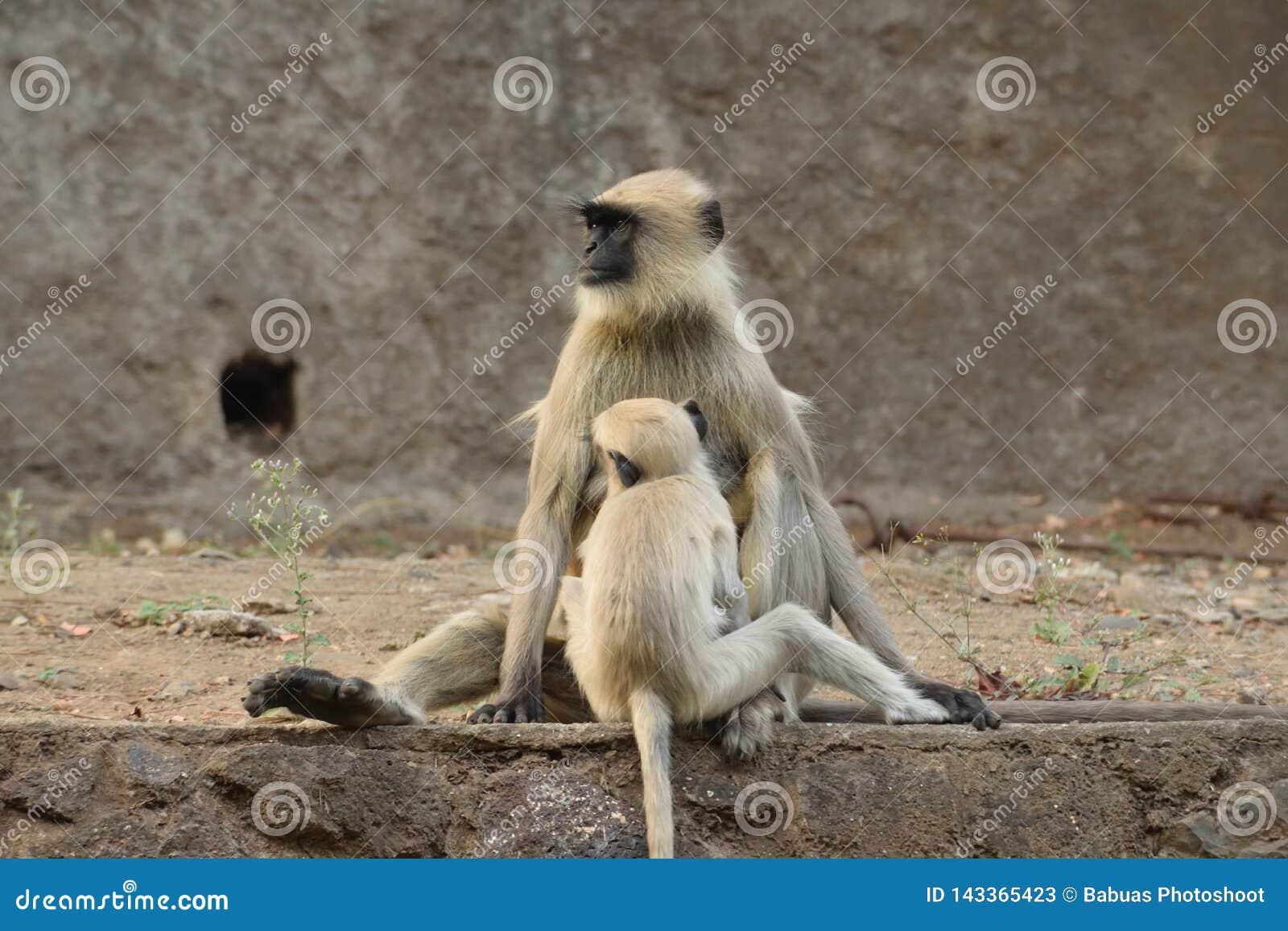 母亲和孩子永恒债券