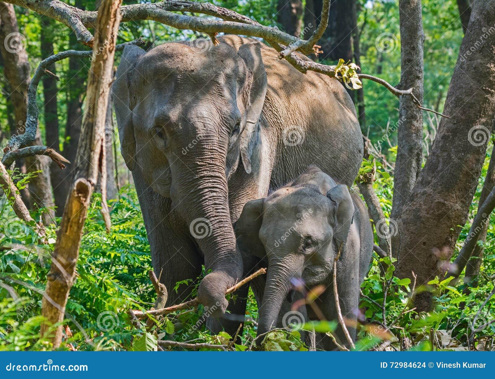 母亲&婴孩大象