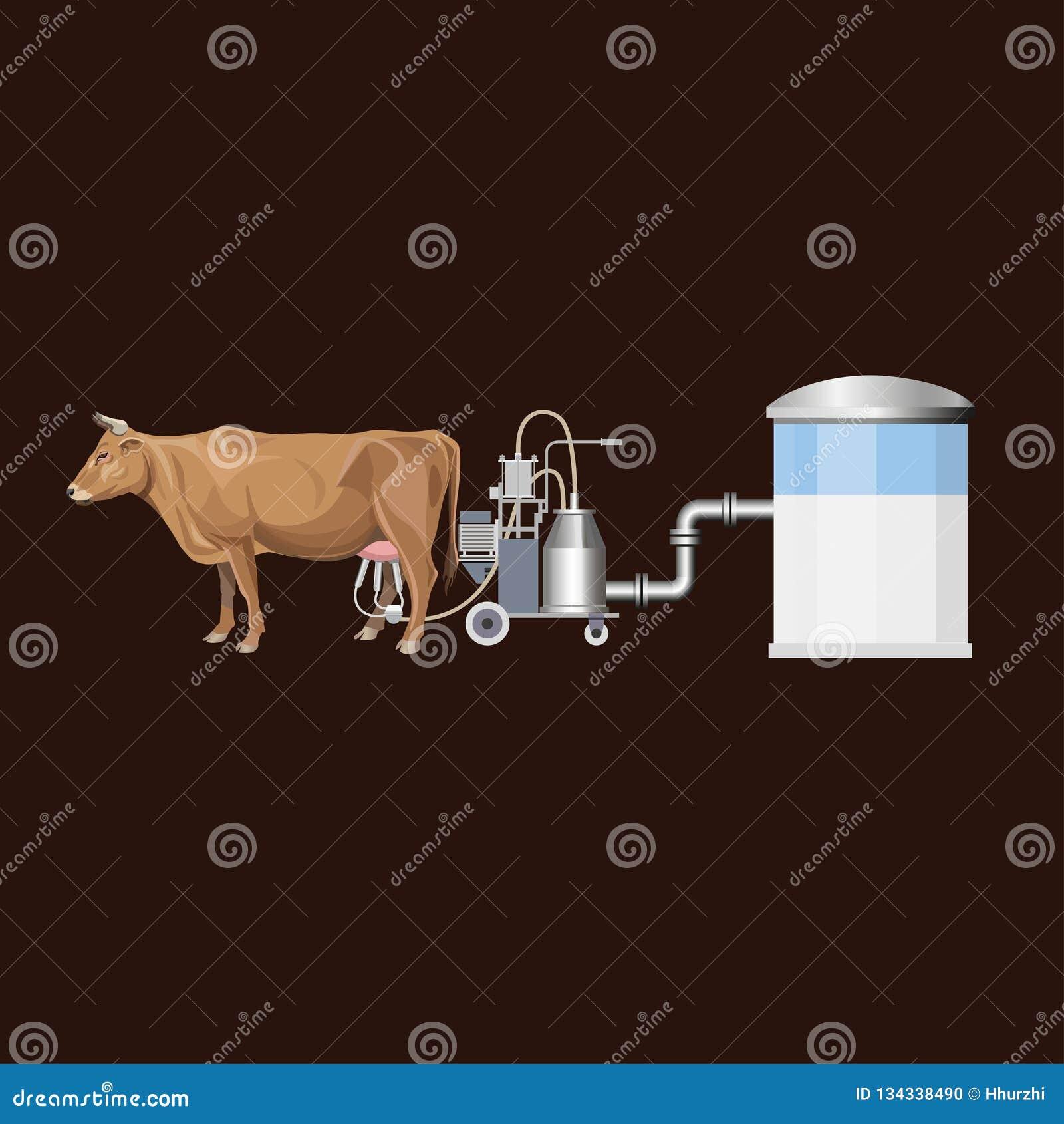 母牛和挤奶机