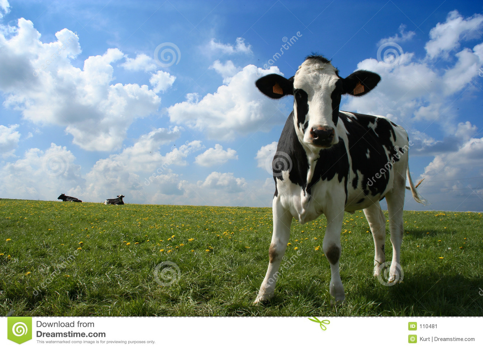 母牛牧场地