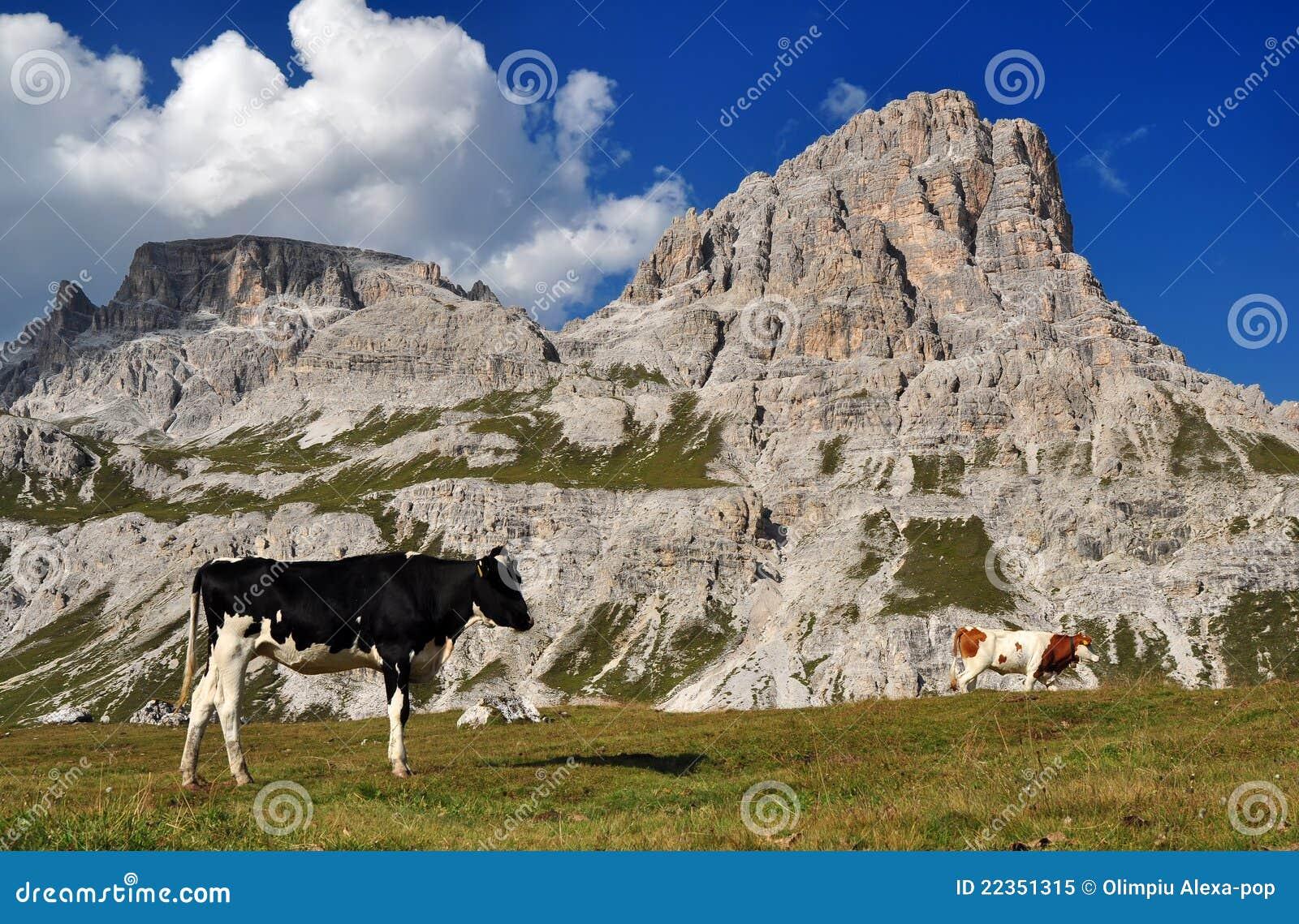 母牛白云岩山