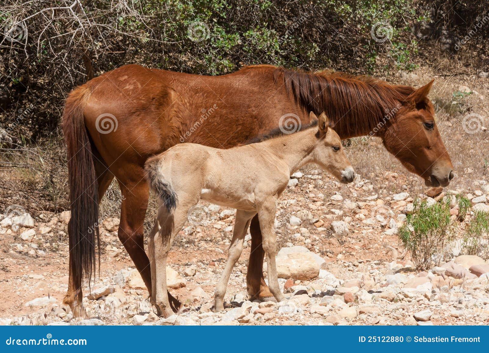 沿基本峡谷全部母马走的一岁.
