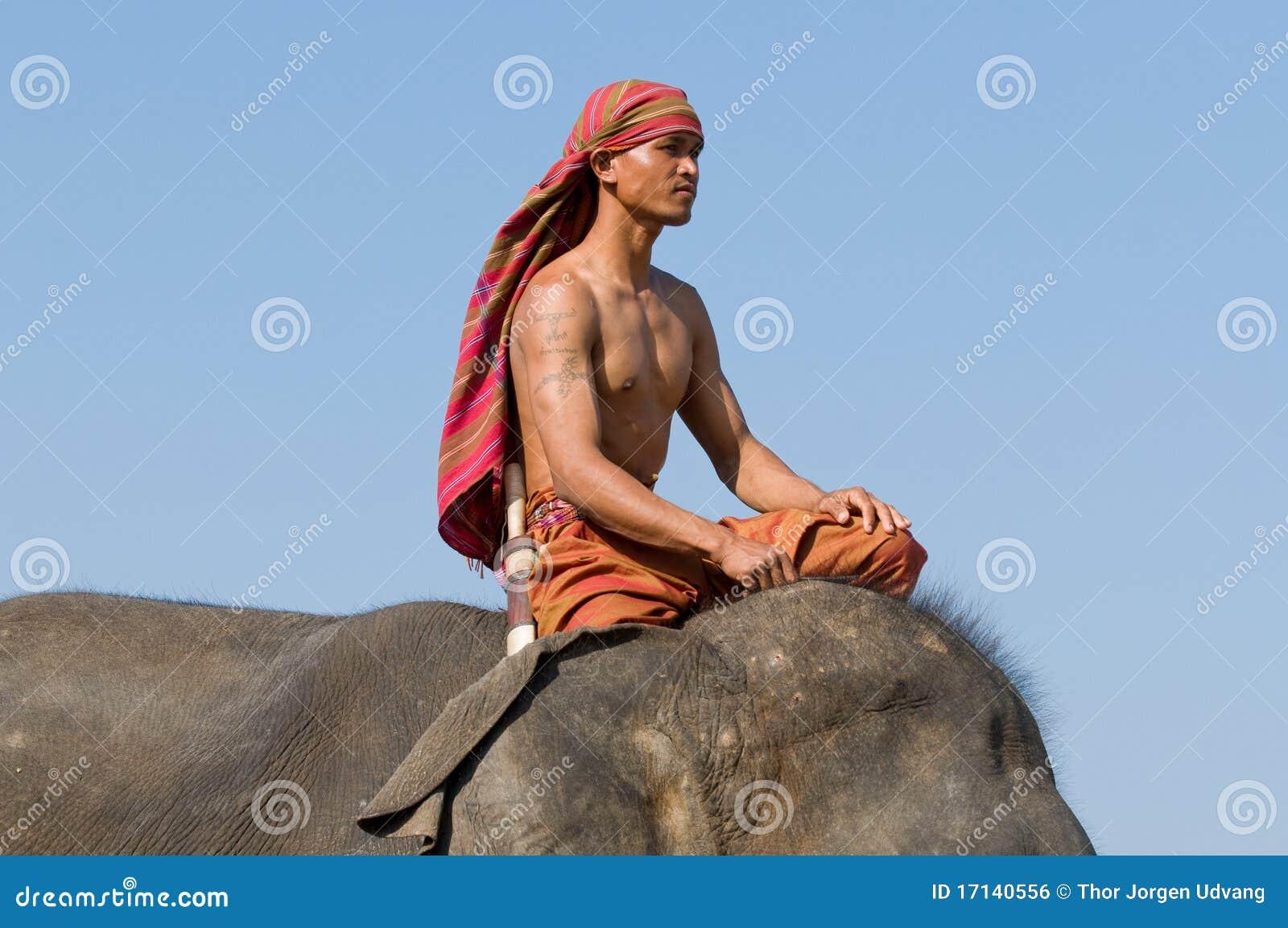 每年大象召集surin泰国