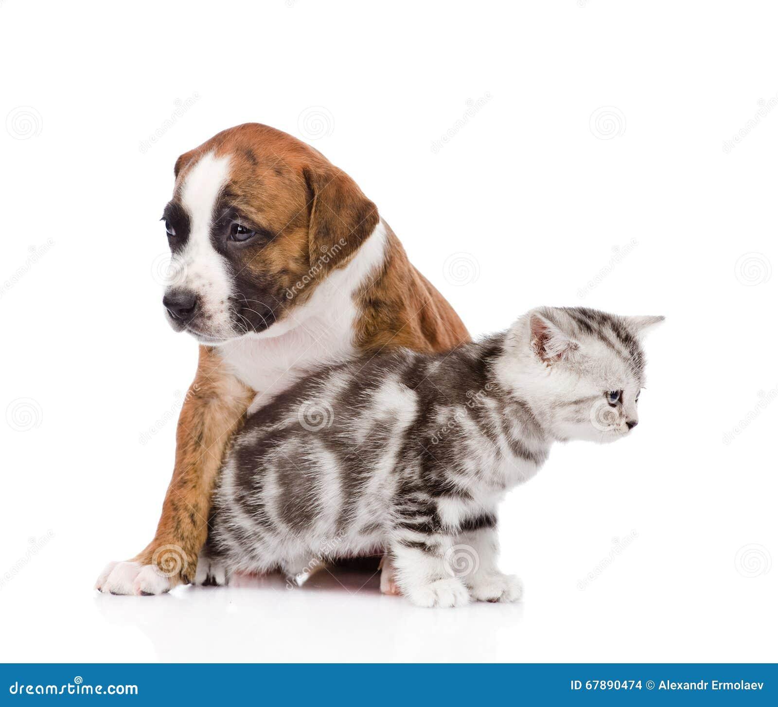 每猫和的狗看起来方式 背景查出的白色