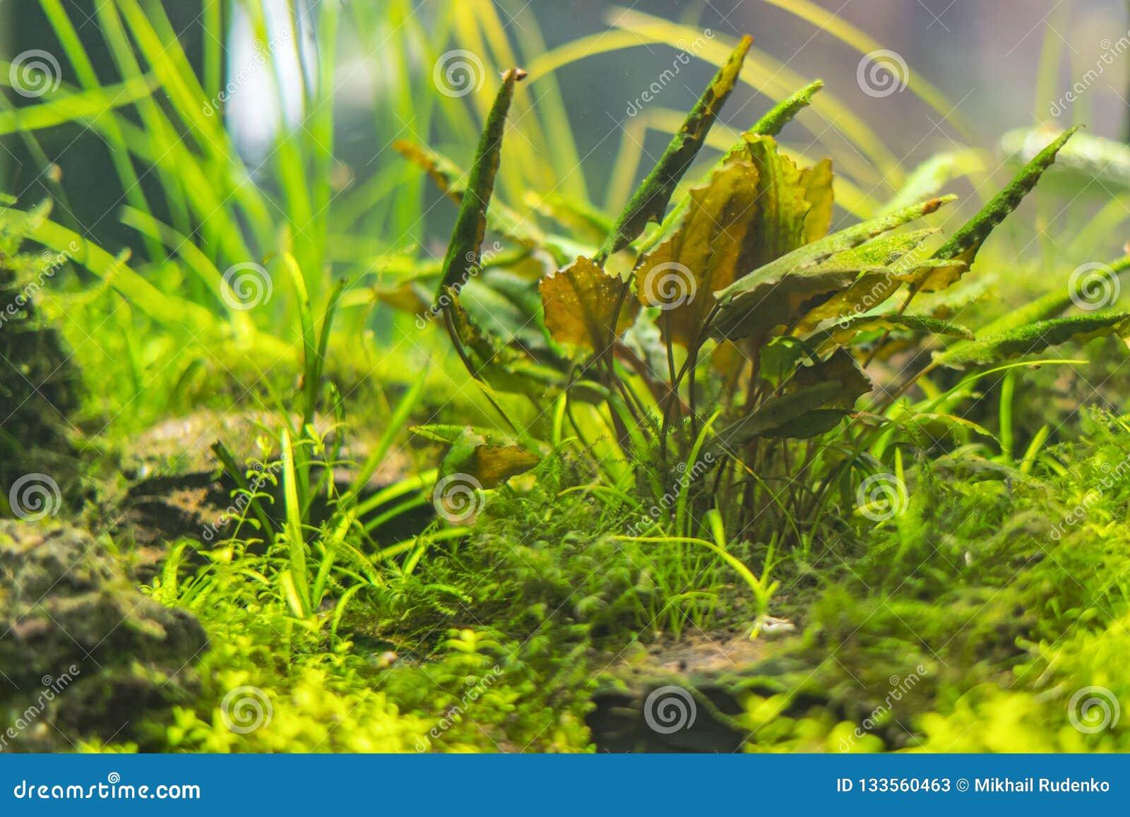水下的世界水生海杂草野生生物生态系f