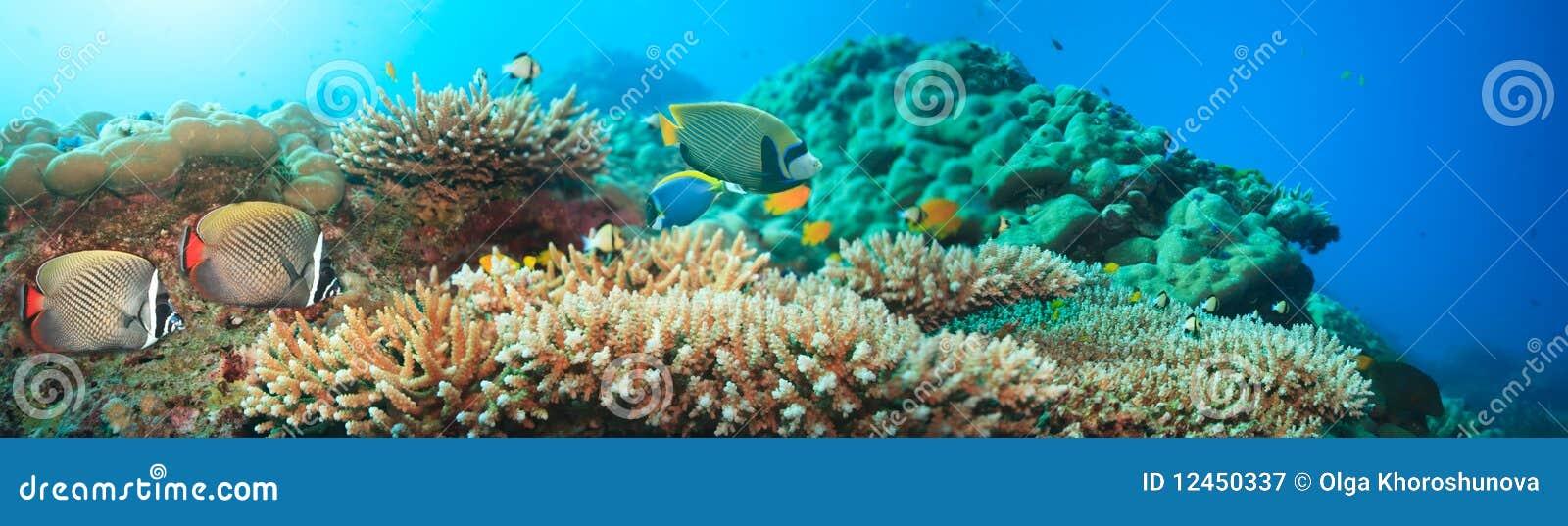 水下的全景
