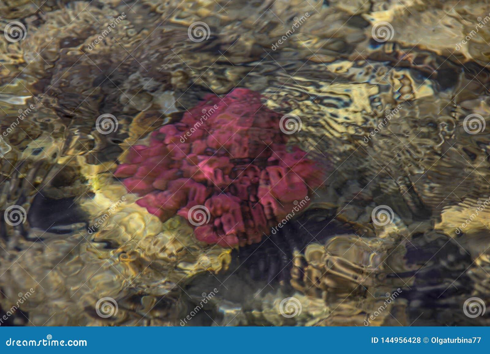 五颜六色的水下的生活 水下的抽象纹理