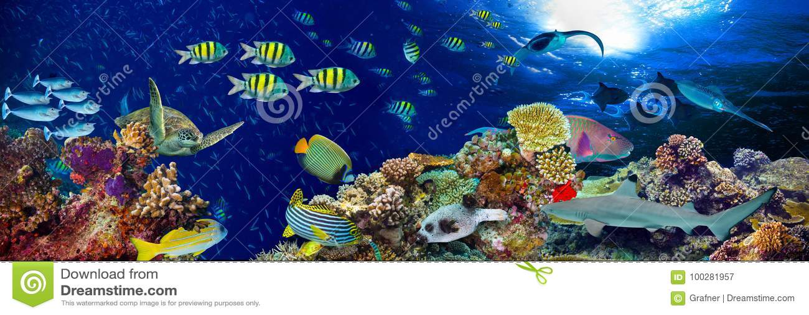 水下的珊瑚礁风景宽全景