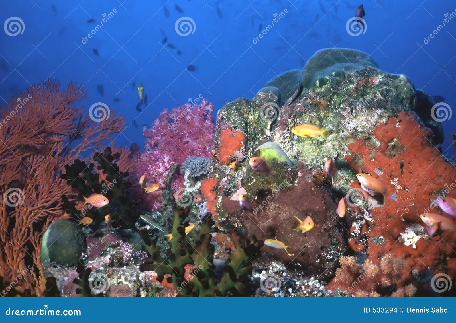 Download 水下的candyland 库存照片. 图片 包括有 魔术, 潜水员, 海洋, 珊瑚, 平静, 神秘, 旅游业 - 533294