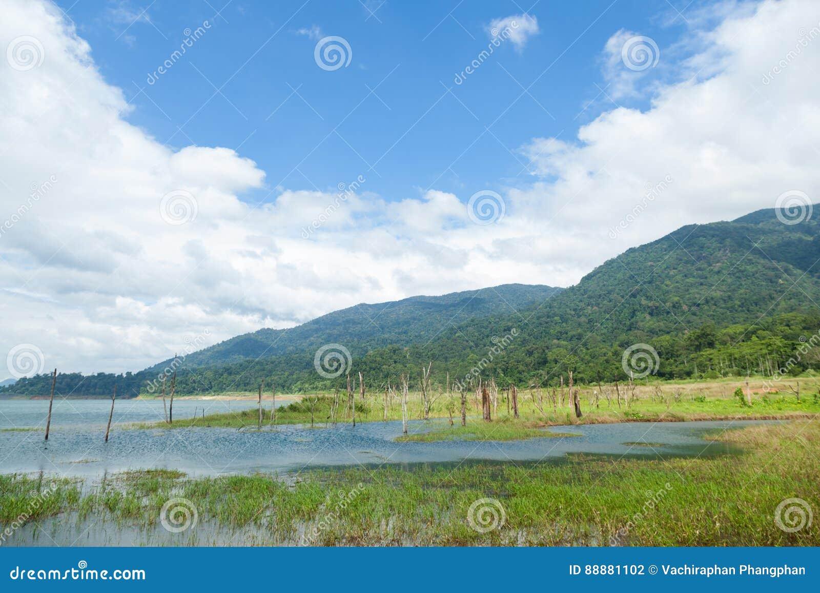 水库、谷和森林