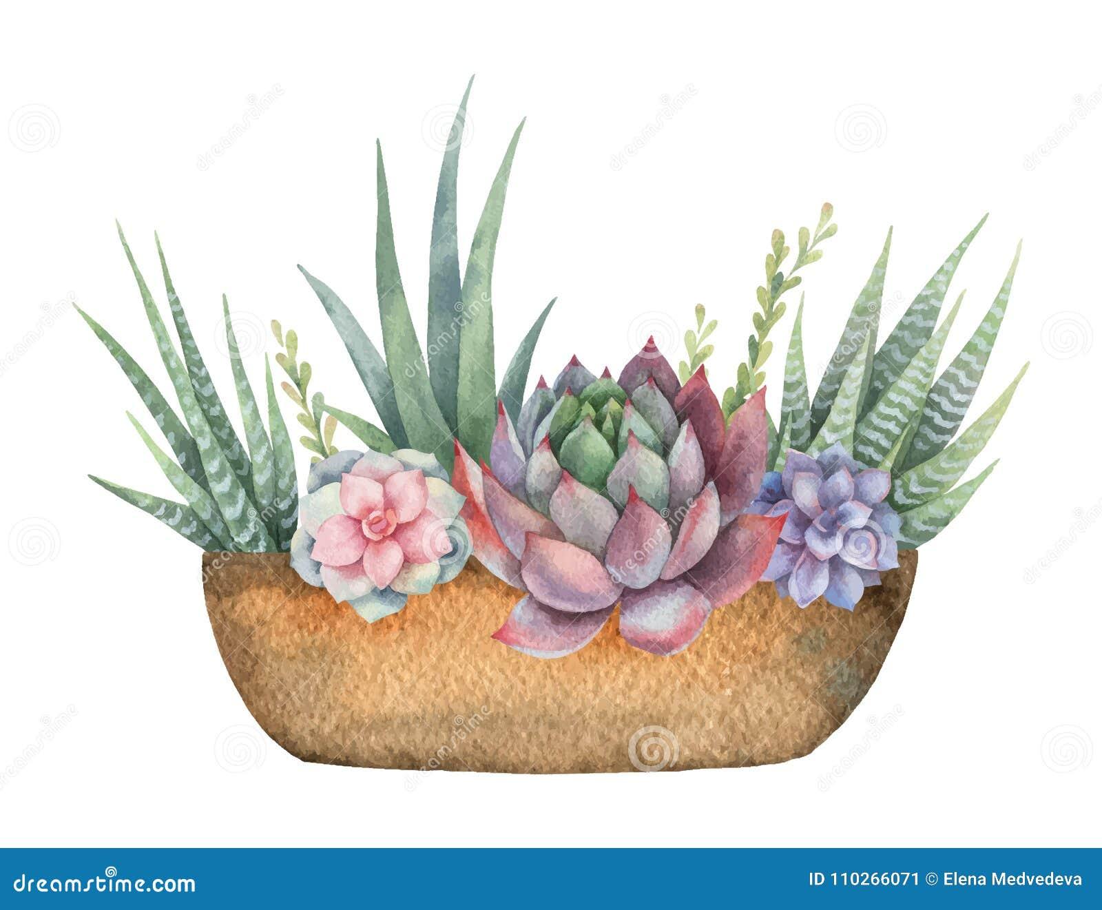 水彩传染媒介结构的仙人掌和多汁植物在白色背景隔绝的罐