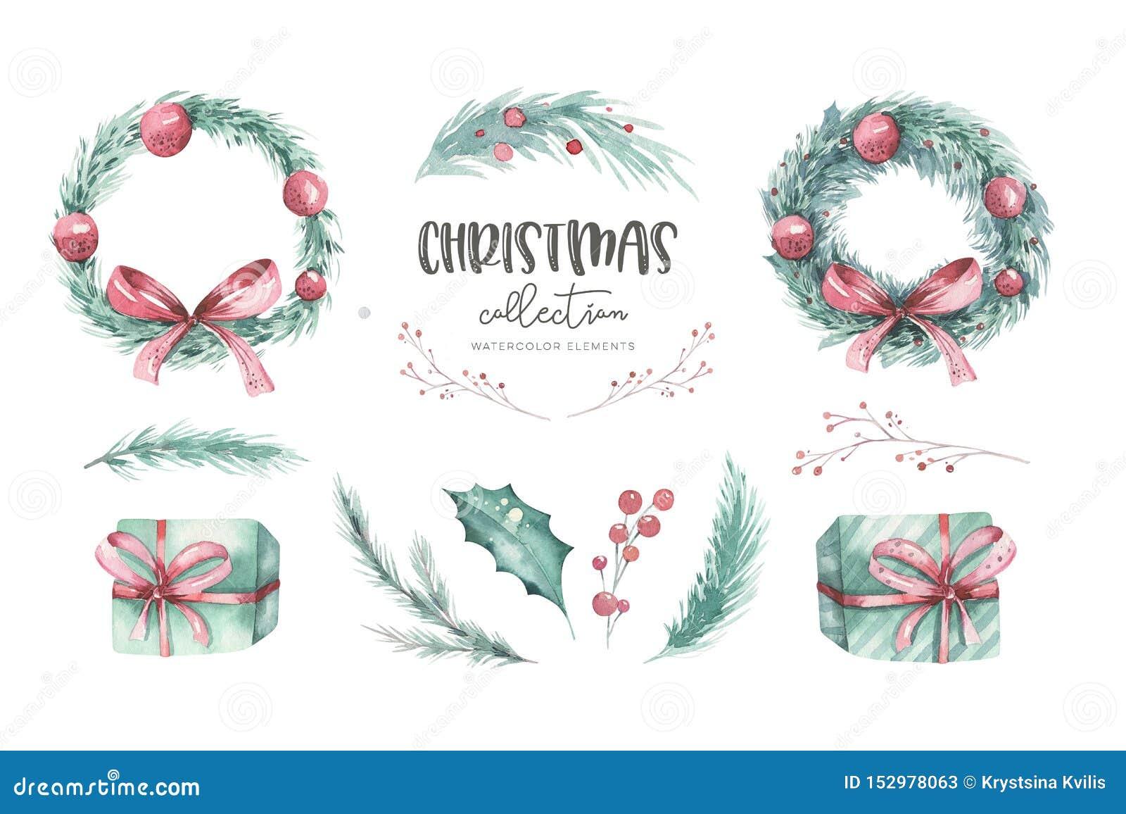 水彩圣诞节套与圣诞树云杉的分支、花和莓果的花圈在白色背景