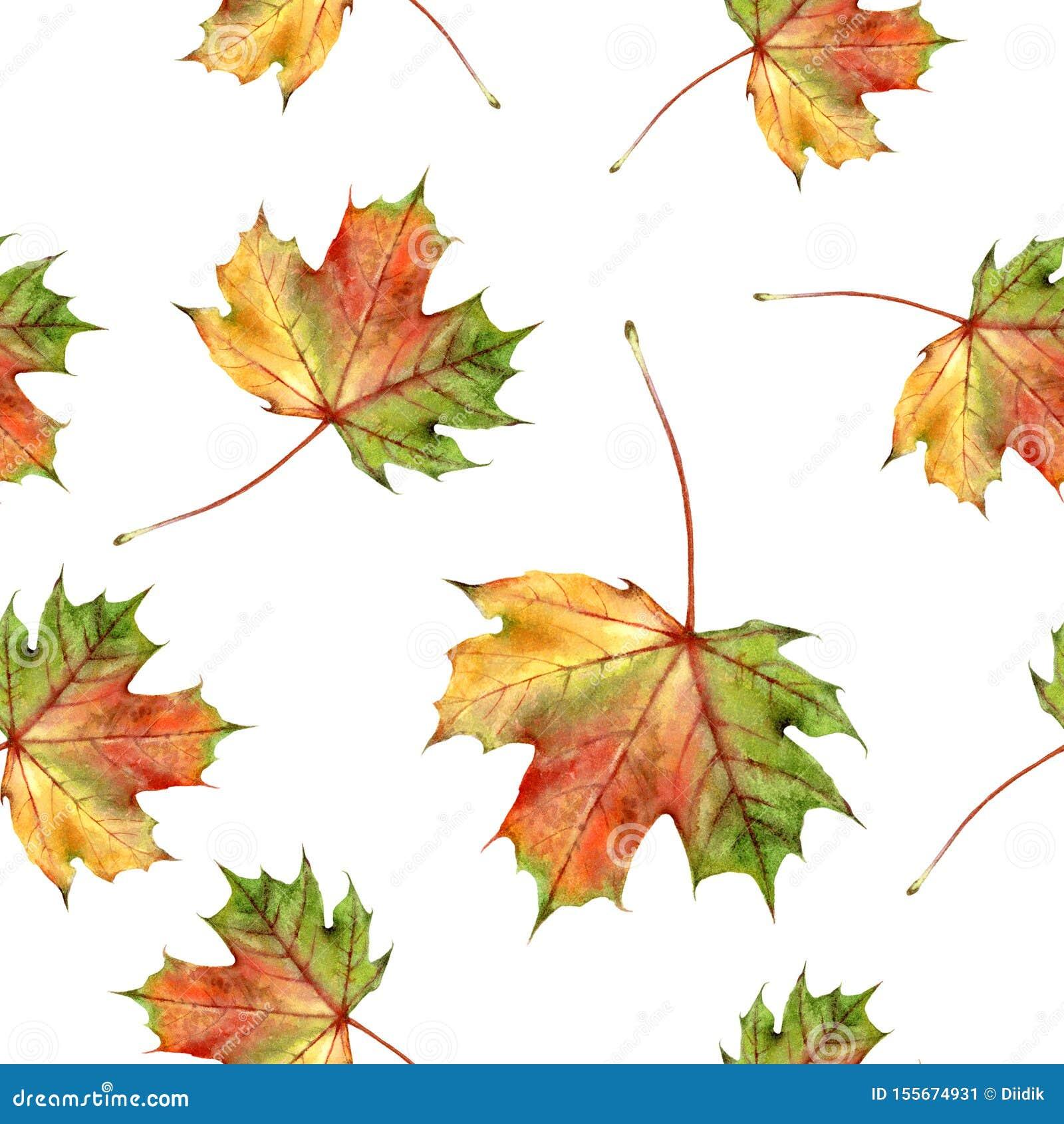 水彩手拉的秋天叶子被隔绝的无缝的样式