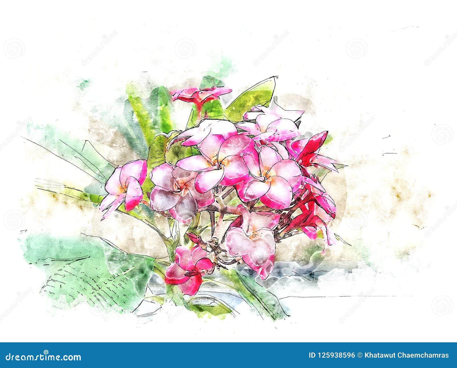 水彩桃红色羽毛花例证样式