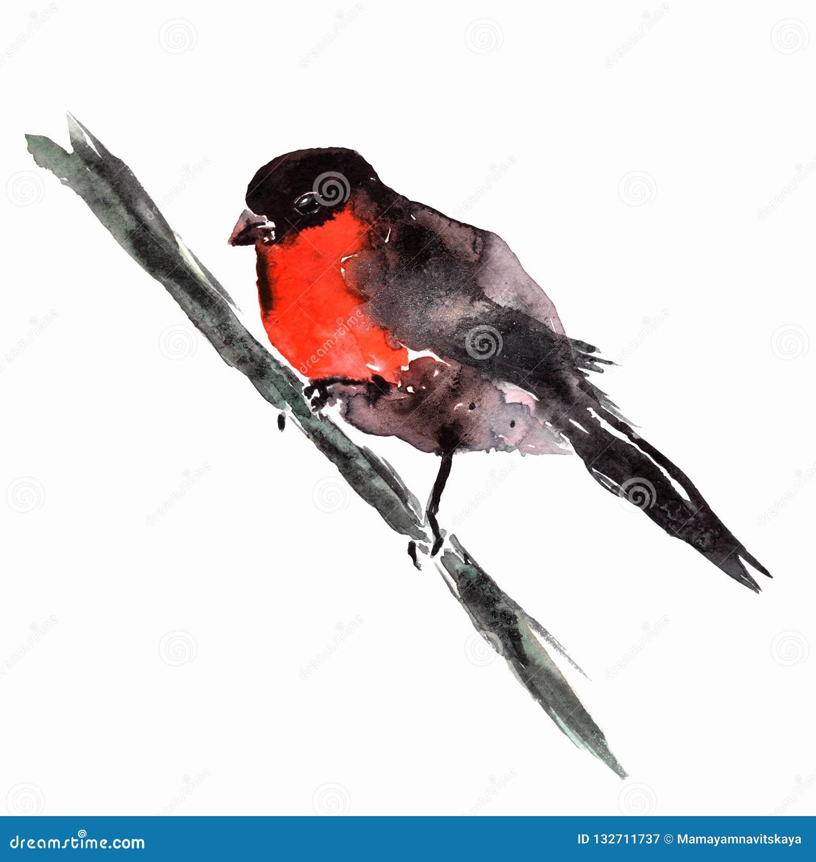水彩红腹灰雀坐树枝 与在白色背景隔绝的鸟的手画冬天例证 假日prin