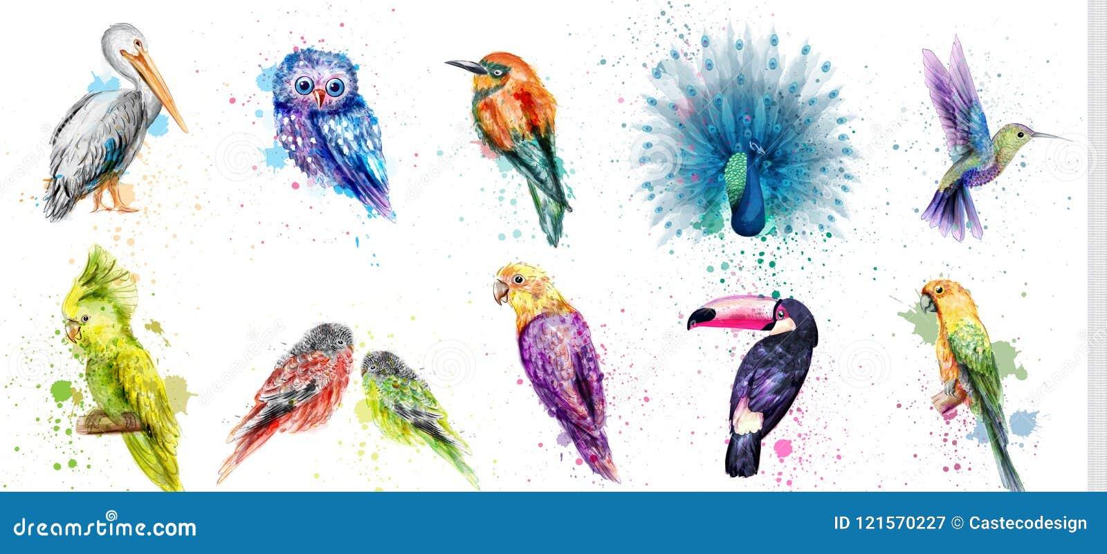 水彩鸟被设置的传染媒介 孔雀,猫头鹰,鹈鹕,鹦鹉,哼唱着鸟汇集