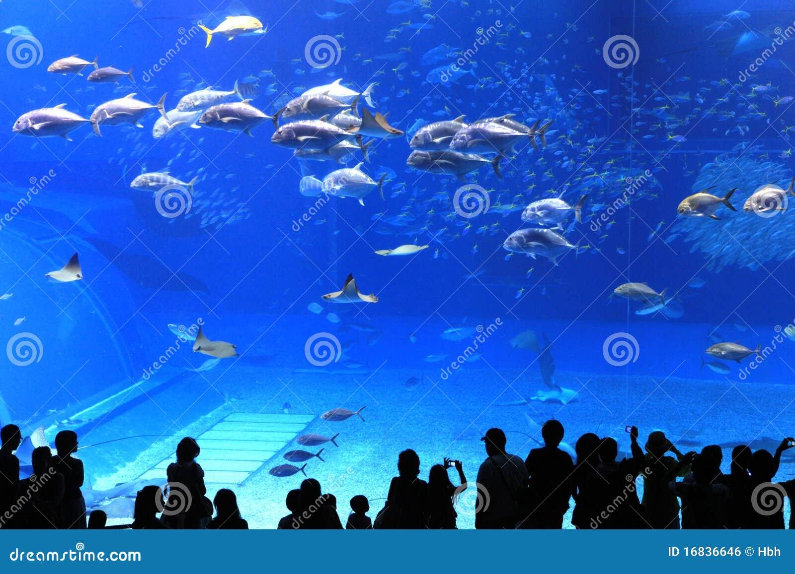 水族馆冲绳岛