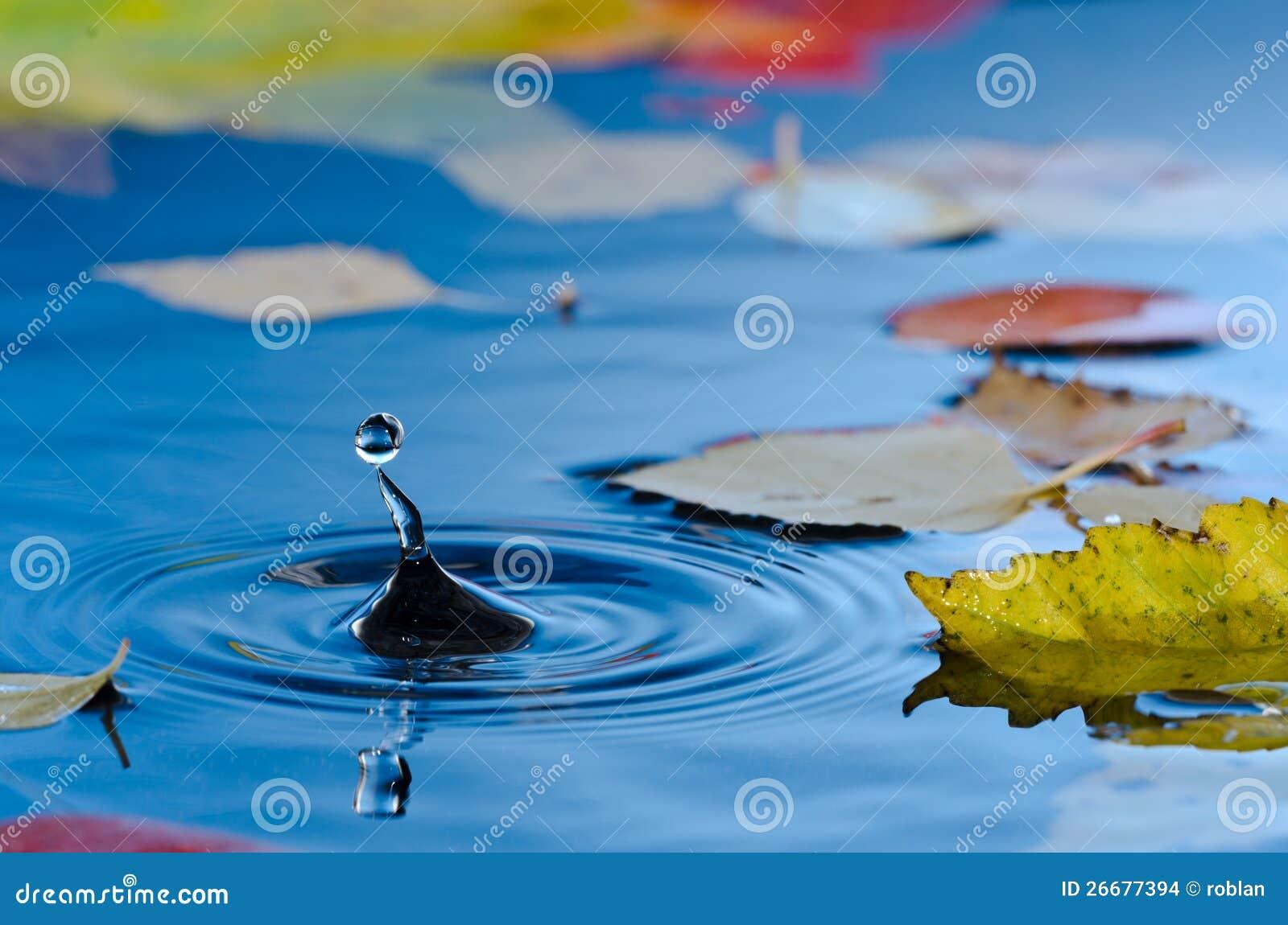 水滴在有秋叶的池塘