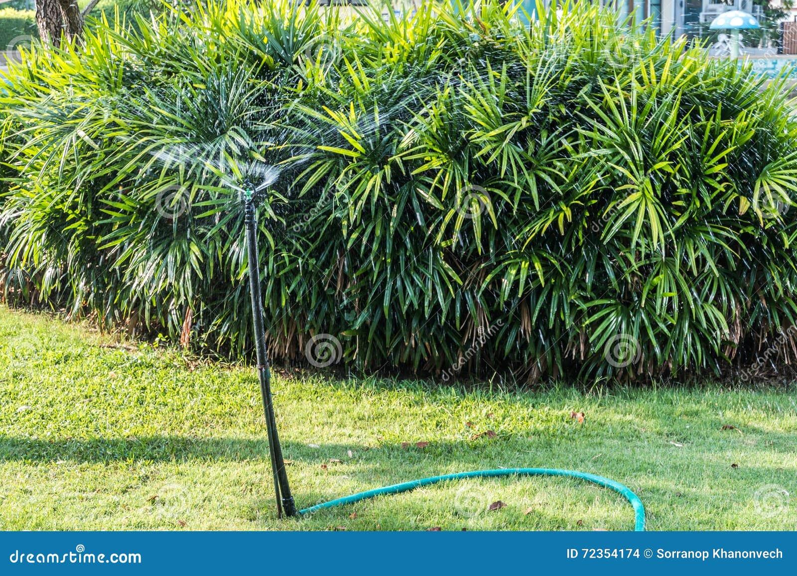 水生植物在庭院里