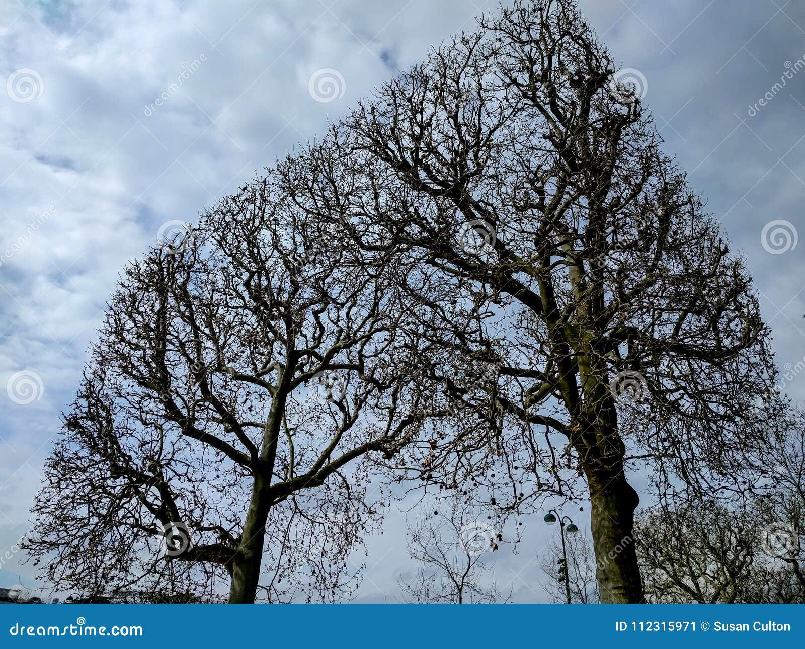求立方的几何树在冬天