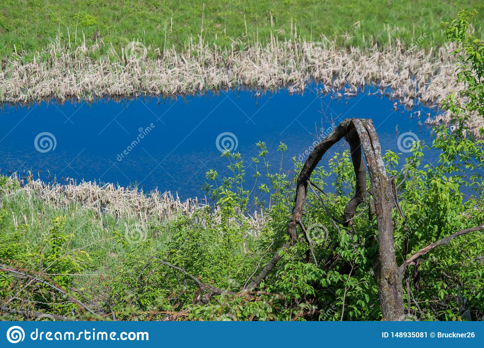 池塘、沼泽和丛林在它附近