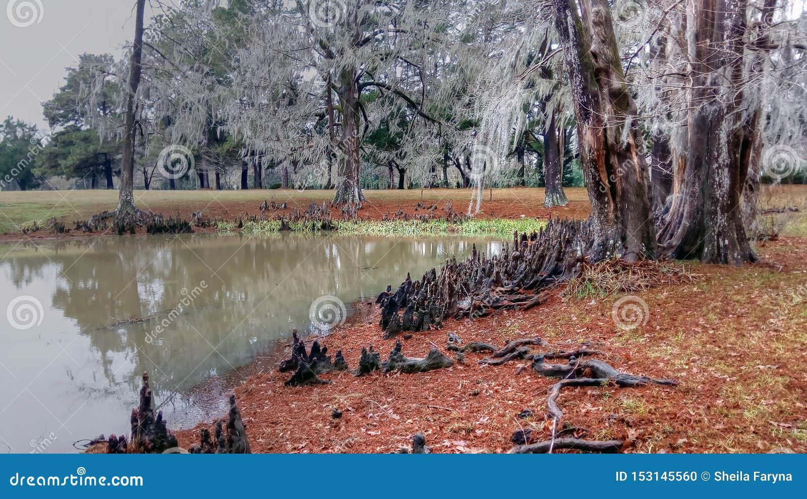 池塘和柏树的美好,但是令人毛骨悚然的捕获